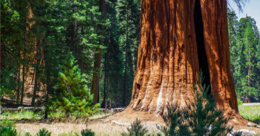 Sequoia National Park RV Rentals